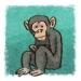 monkey (Illustration von Till Lassmann / Sebastian Koch)